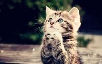 gatto energia positiva