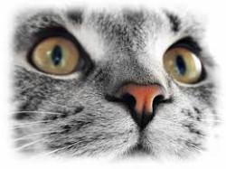 gatto energia