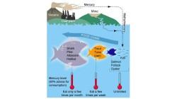 Livello di mercurio mare