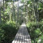 foresta-amazzonica-manaus
