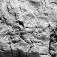 fossili di crionidi su marte