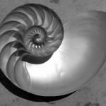 spirale mollusco