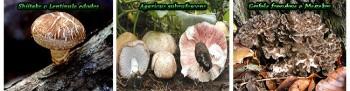 funghi con proprieta' anti cancro
