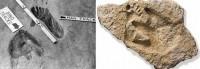 antiche-impronte-uomo-dinosauro