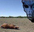alieni-abduction-e-mutilazioni-doc