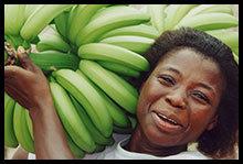 banane-geneticamente-modificate
