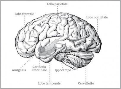 memoria-e-ricordi-cervello-umano