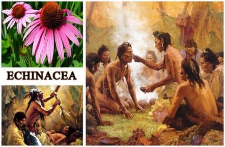 pianta-echinacea-rimedi-naturali