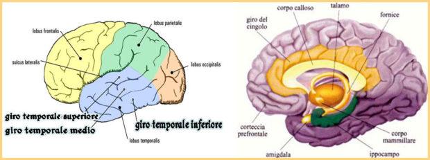 salute-cervello-lingue-straniere