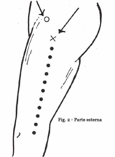 parte-esterna-fig2