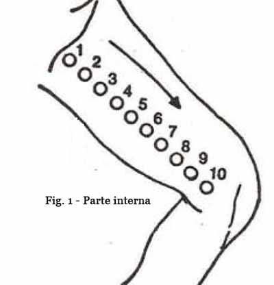 parte-interna-fig1