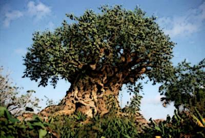 metagenealogia albero genealogico